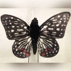 Sunny Checkerspot Butterfly Puppet