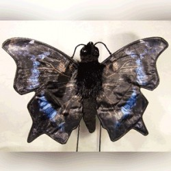 Sunny Mourning Cloak Butterfly Puppet