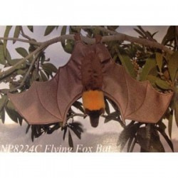 Sunny Flying-Fox Bat