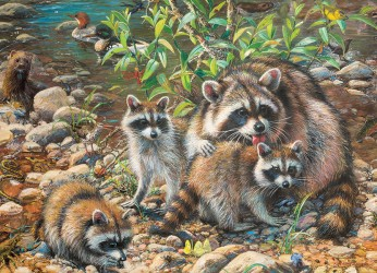 Raccoon Family - Family Puzzle